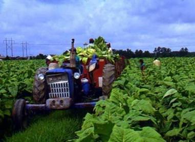 La Regione Umbria sta attivandosi verso una concreta difesa della tabacchicoltura