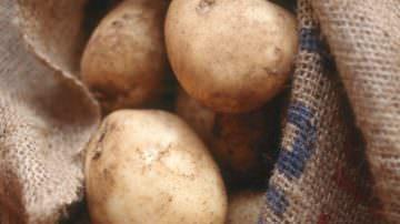 OGM: Coldiretti, la patata è l'ortaggio più coltivato dopo il pomodoro