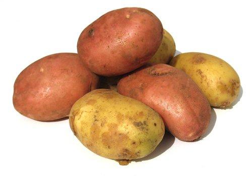 La patata Amflora può danneggiare l'humus