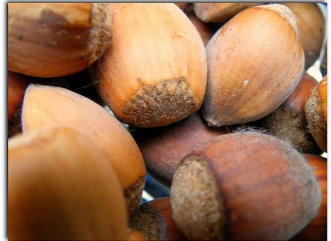 Aumentati i limiti di legge per le aflatossine: perché?