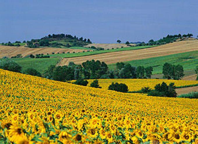 Umbria: A Spello continua il tour enogastronomico floreale