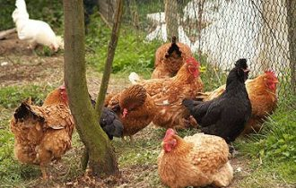 Influenza aviaria, rilevato contagio su umano in Emilia Romagna