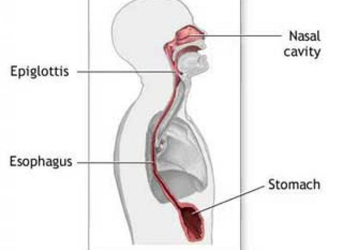 Allergia: l'esofagite eosinofila ha una causa genetica