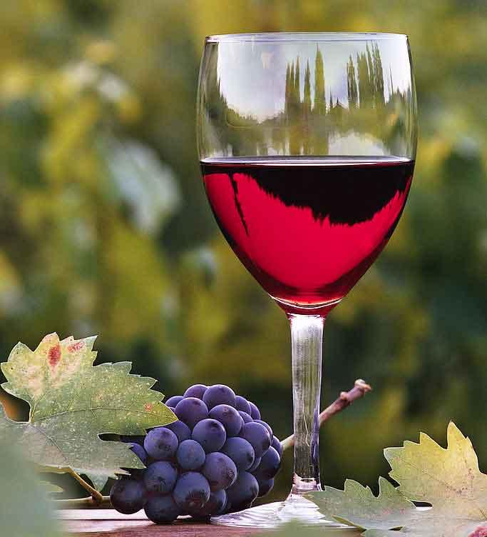 Special: Organic wine