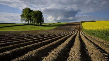 Lombardia: Aperto il primo bando relativo ai distretti agricoli