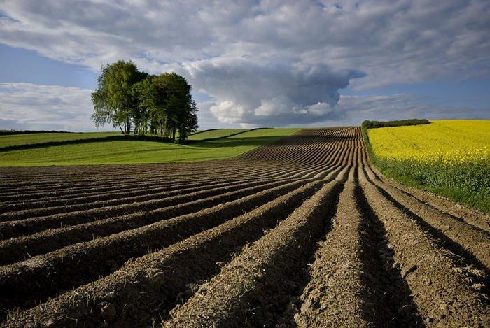 Crisi: in dieci anni oltre 500 mila imprese agricole costrette a chiudere