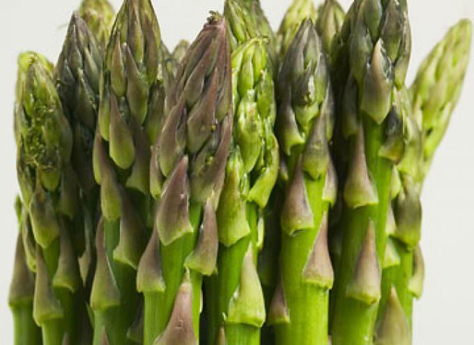 Il principe della tavola, l'asparago, sarà festeggiato il 28 aprile a Moncalieri