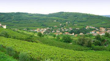 Raccontare Gambellara: terra di grandi vini, e non solo