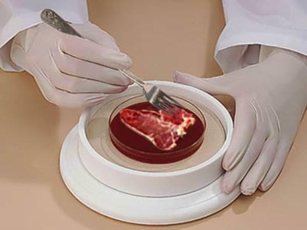 In Olanda si sperimenta la carne artificiale