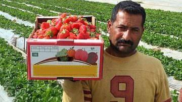 Immigrazione: Al via le domande per il lavoro stagionale