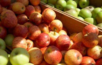 Trentino, due milioni di euro per la raccolta delle mele