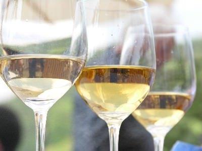 Vita vine. Il vino d'Abruzzo alla conquista di Berlino