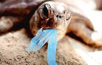UN DATO DA PAURA: solo in Europa, vengono consumati e buttati nell'ambiente circa 100 miliardi di sacchetti di plastica