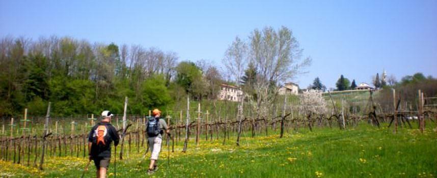 Biogusto 2010: prodotti e sapori del Grappa, trekking tra le vigne