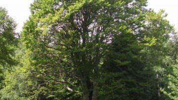 Confagricoltura pianta a Maranello il primo di 5 milioni di alberi