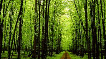 """""""Giornata della Terra"""", Confagricoltura dà il suo contributo alla difesa del pianeta piantando 5 milioni di alberi"""