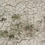Coldiretti, anche l'Italia interessata dall'allarme siccità