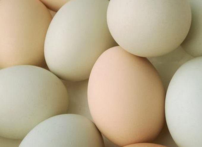 Sorpresa nelle uova, un pieno di antiossidanti benefici