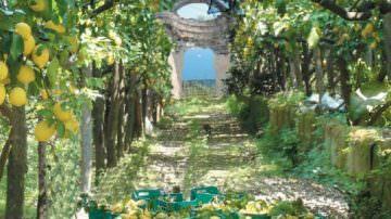 Agricoltura: Pali di castagno per i limoni di Sorrento
