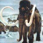 DNA: creata proteina dal sangue dei mammut