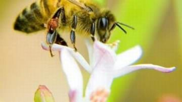 Healthier pollinators: Reducing the threats to Europe's bees
