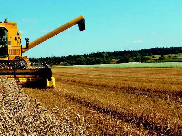 Agricoltura: Arriva Rxgrains, la tecnologia Rx che legge la qualità dei cereali