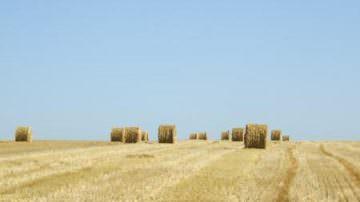 Foggia: Un supporto alle imprese agricole, in particolare a quelle più piccole