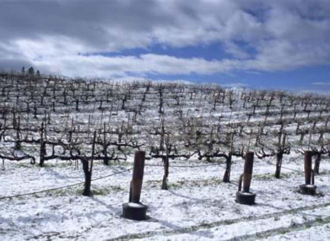 Il rigido inverno friulano ha causato ingenti danni all'agricoltura