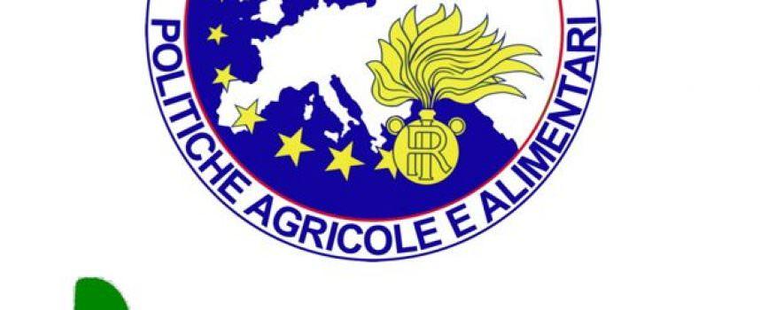"""Venezia: 500 tonnellate di carote """"Biologiche"""" trattate con diserbanti"""