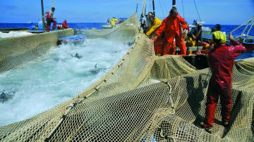Gli effetti della pesca sui mari peggiori del previsto