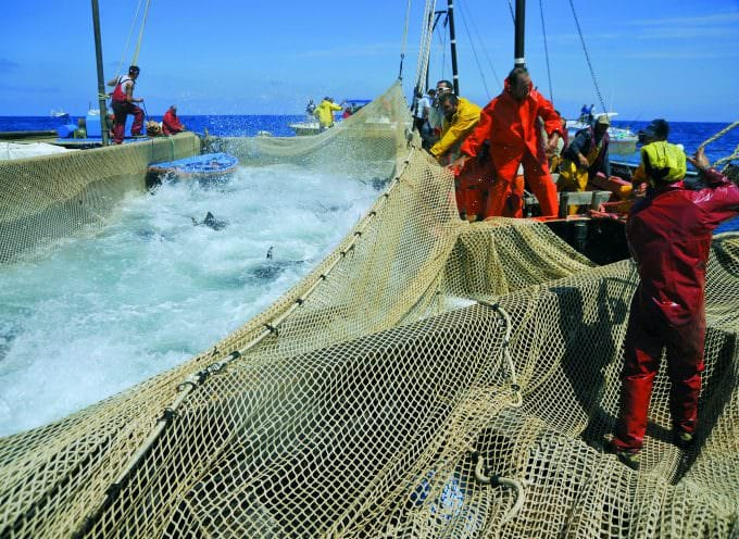 Pesca: No all'import di prodotti extra Ue