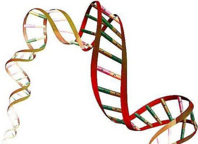 SLA, identificato il gene VCP