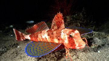 Addio pesce al mercurio: ci penserà il nano-velcro