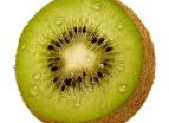 Confagricoltura: un batterio molto aggressivo falcidia i kiwi del Lazio
