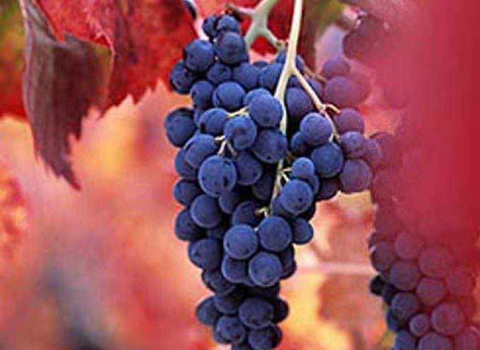 La Barbera d'Asti D.O.C.G. debutta a Wine Kiss nell'estate romana