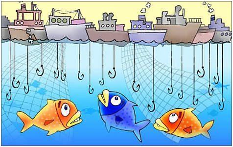 Pesca: impresa pesca (Coldiretti) da oggi stop a telline e cannolicchi