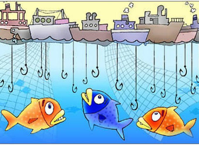 Garda: I° Festival del Pesce d'Acqua Dolce…senza pangasio