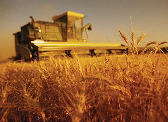 Italia: meno terreno agricolo, più dipendenza alimentare