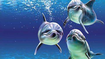 Carne, Le Iene denunciano: delfini servito nei ristoranti italiani