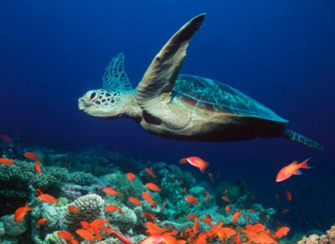 Adotta una tartaruga marina