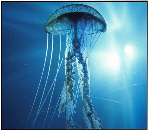 Mediterraneo, le meduse in continuo aumento