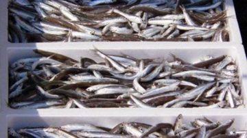 Pesce: no aragosta, si al low cost