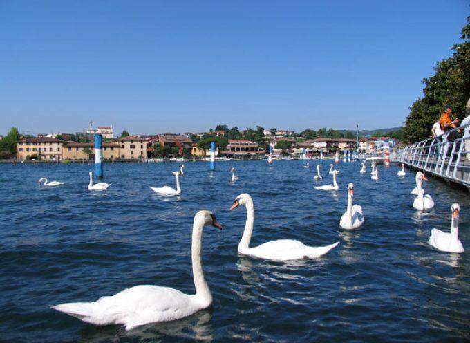 """Il Lago d'Iseo, """"L'Oro in Bocca"""", l'Olio Extravergine DOP … e la """"Sarneghera"""""""