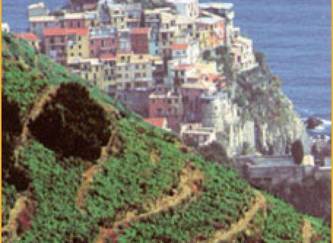 Liguria, terra di vini tipici che raccontano il territorio