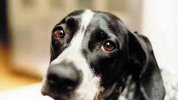 E' nel randagismo il futuro dei veterinari?