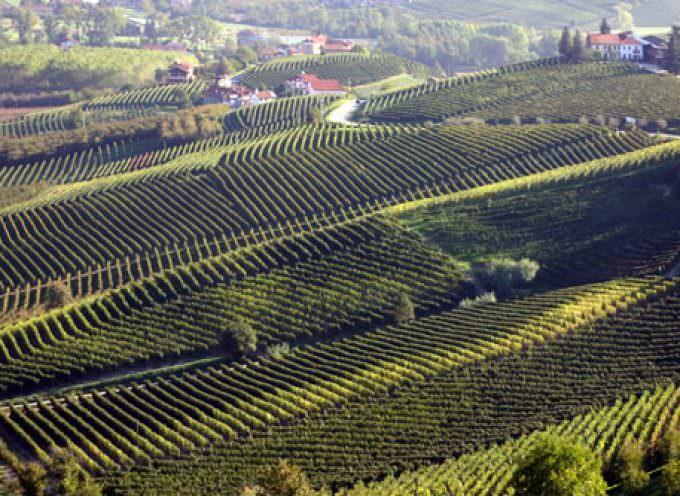 Langhe, terra di vino e sapori