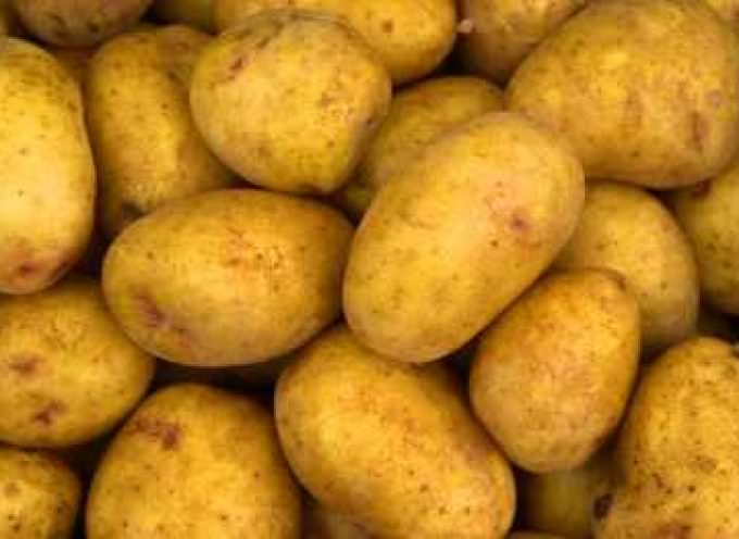 OGM, la patata Fortuna all'esame dell'Unione Europea