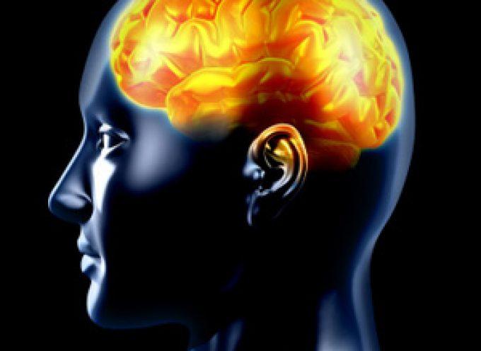 Si trova nel cervello il circuito che spegne l'ansia