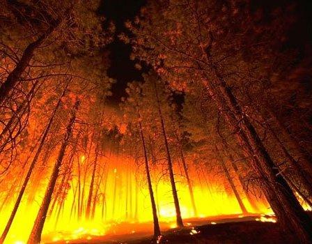 La FAO lancia un sistema di monitoraggio degli incendi sviluppato dalla NASA
