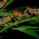 Nutrienti ed eco-sostenibili: gli insetti alimento del futuro